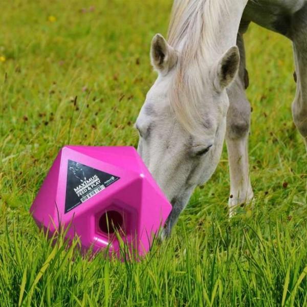 Maximus Futter- und Belohnungswürfel für Pferde Rosa